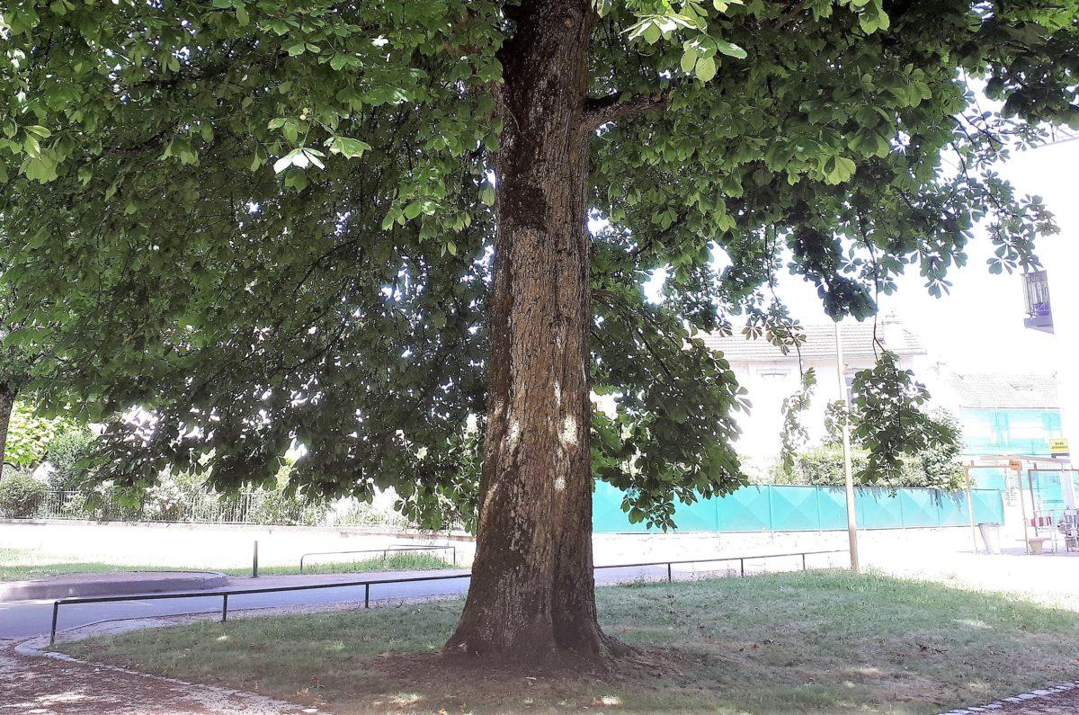 branches basses colombière 06 2017 (2)