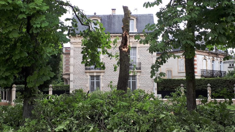 Arbre detruit 44 c. du G. de Gaulle 07 2017 (1)