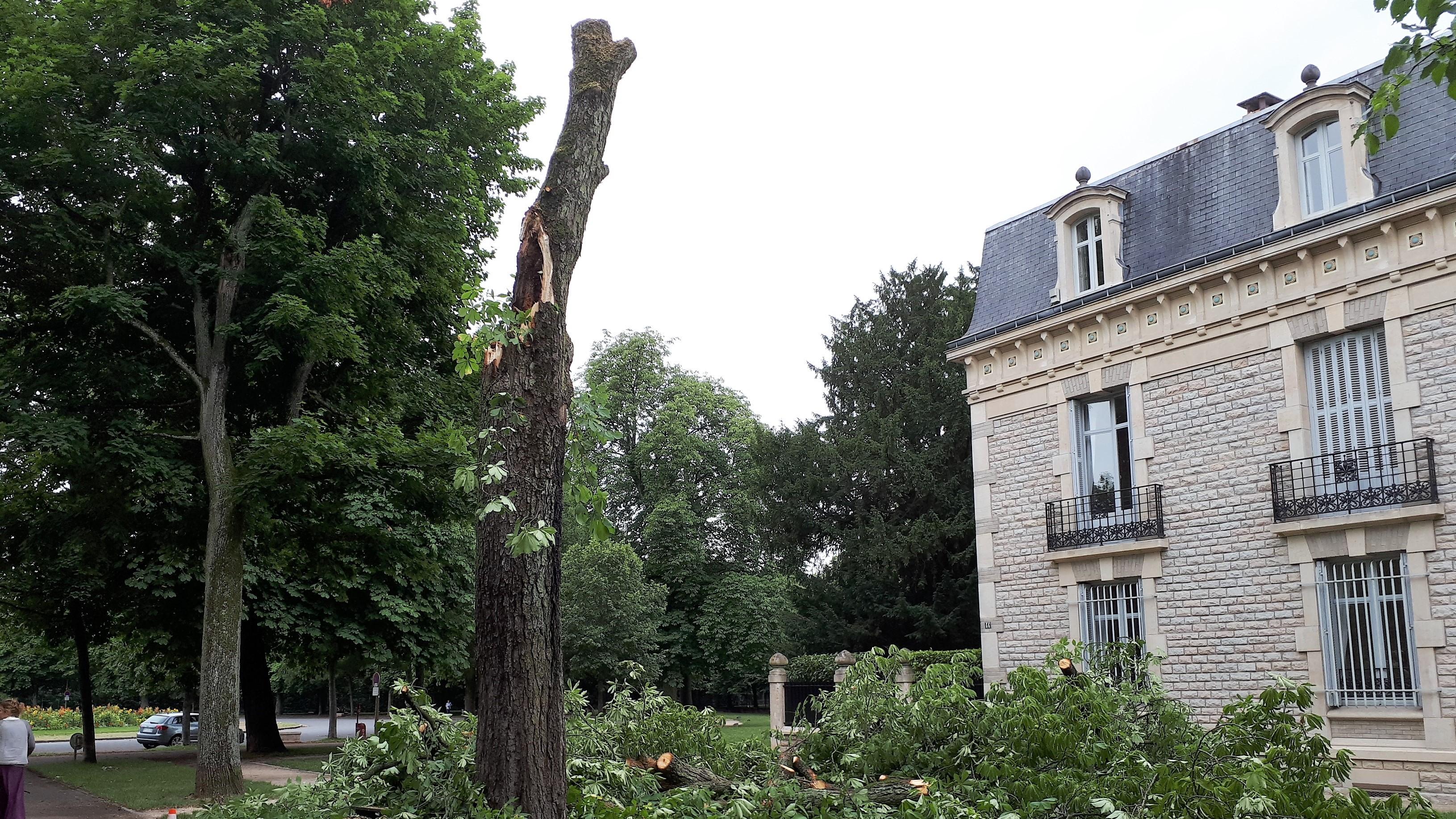 Arbre detruit 44 c. du G. de Gaulle 07 2017 (2)