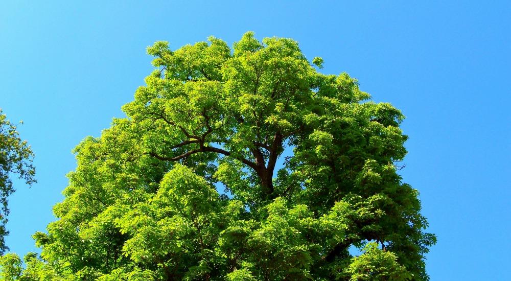 arbres-2-parc-de-la-colombiere-dijon