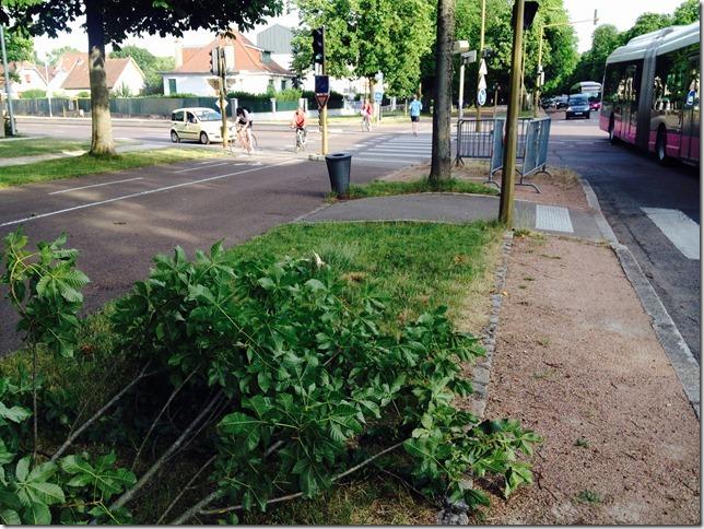 arbre-casse-c-du-parc-06-2015-2