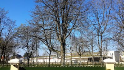 Arbre F. Ourgaud (2)